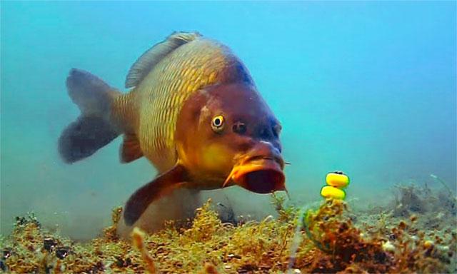 carp-pod-vodoy