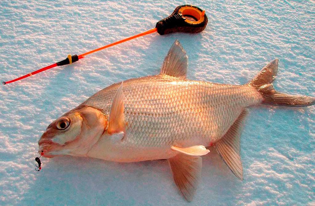 прикормки крупной рыбы