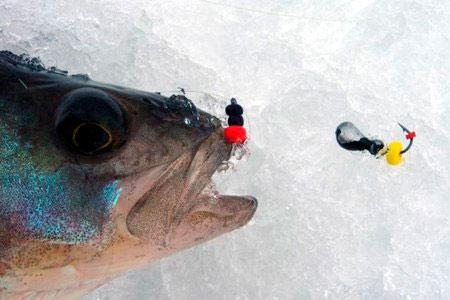 на что лучше клюет рыба летом