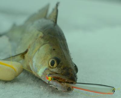 почему не клюет рыба в клязьме