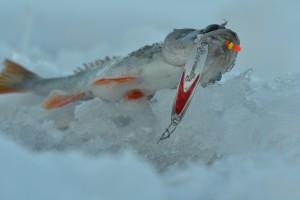 блесна зимняя EcoPro судачья