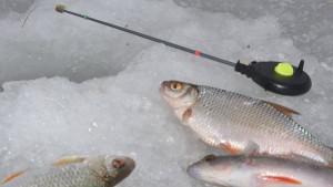 ловля плотвы на льду